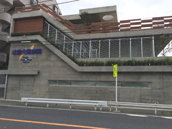 辻堂犬猫病院 after1
