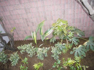 植物.jpg